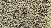 Wool Sheep Closeup. Closeup Karakul Fur Texture To Background. Fur Background. Gray Cotton Wool Shee poster