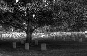 stock photo of headstones  - A tree cast a shadow on headstones in Arlington National Cemetery while the sun shines brightly on the headstones in the background - JPG