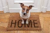 stock photo of lovable  - dog welcome home on brown mat and door - JPG