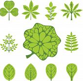 Different  Types Of Leaves, Vector Illustration
