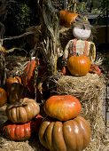 Halloween Doll Surrounded By Pumpkins