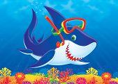 Shark Diver