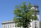 Tree In Front Of Palace In Kassel, Germany
