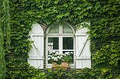 Pont-tranchefetu, Window
