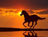 Horse running during sunset with water reflection