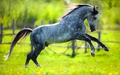 Horse gallops in springtime on field.