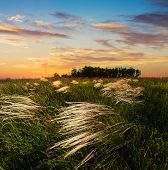 Feather Grass At Sunset In The Field