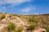 image of carlsbad caverns  - Impressive and scenic landscape in New Mexico near Carlsbad - JPG