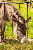 pic of headstrong  - Donkey in a Field in sunny day - JPG