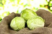 Green cabbage on sackcloth, on bright background