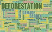 picture of deforestation  - Deforestation Forest Loss Damage Concept as Art - JPG