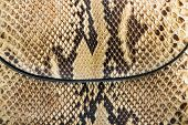 picture of mustering  - Texture of genuine snakeskin Close up real leather texture - JPG
