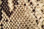 picture of mustering  - Texture of genuine snakeskin Close up real leather texture