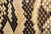 pic of mustering  - Texture of genuine snakeskin Close up real leather texture - JPG