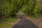 Trail Scenic
