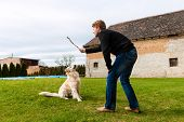 Young man playing with his dog on a meadow with a stick