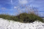 foto of sea oats  - White sands - JPG