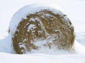 Hay bale in winter
