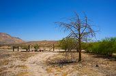 Desert Farm Yard