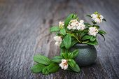Flowers In A Clay Vase Cowberry