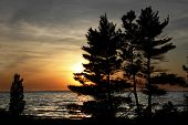 Eastern White Pines On Shore Of Lake Huron At Sunset