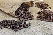 Four Samples Pure Arabica Coffee Beans Of Various Origins