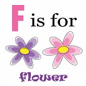 F is for Flower