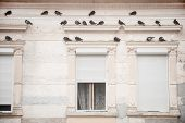 Pigeons On A Building Facade
