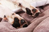 Dog paws on bed