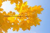 Fall Colors Foliage