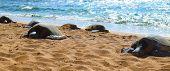 sea turtles basking in the sun