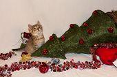 Kitten Destroys Christmas