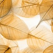 Macro leaves seamless background texture, pattern