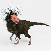 Ornitholestes (dinosaur)