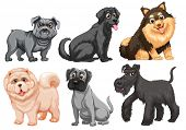 Set of different breed of dogs