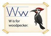 Poster of an alphabet W