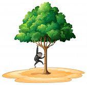 Langur swinging down a tree
