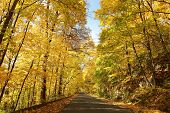 Country road leading through the autumn forest