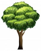 An animated tree flashcard for teaching