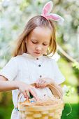 Adorable little girl wearing bunny ears playing with Easter eggs in a blooming garden on spring day