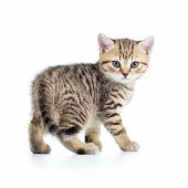playful kitten cat isolated on white