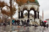 Istanbul, Turkey - November 22: Pigeons walking through puddles on the square