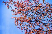 Abstract Autumn Leave Background Against With Bluew Sky