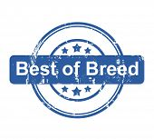 Best of breed business concept stamp with stars isolated on a white background.