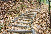 Steps Going Up Hillside In Forest
