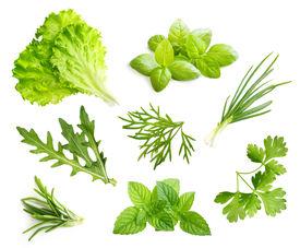 picture of basil leaves  - Parsley herb - JPG