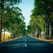 pic of tree lined street  - Road Running Through Trees Alley Sunset Landscape  - JPG