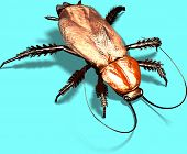 pic of woodlouse  - one more bug in this software - JPG
