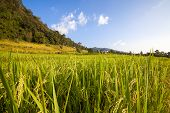 stock photo of bong  - Green Terraced Rice Field at Ban Pa Bong Peay in Chiangmai - JPG
