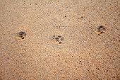 picture of dog footprint  - Close up of dog footprints on the sand beach - JPG